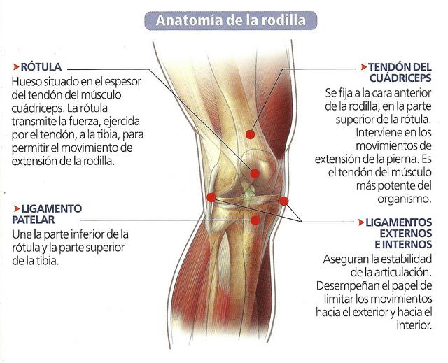 Tendinitis rotuliana quirothai - Dolor en la parte interior de la rodilla ...