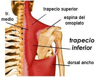 Bolyat las vértebras de la espalda